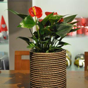 Abaccagefäß H49cm Anthurium 65€