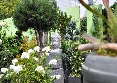 Buddha Pinus Hochstamm Zeder