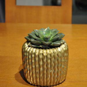 Keramikgefäß D13cm Crassula 19€