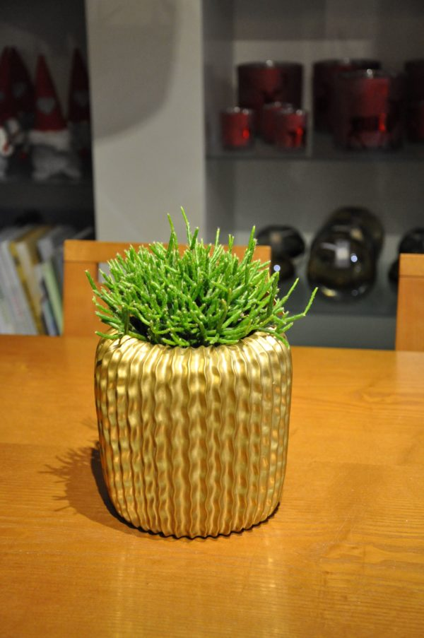 Keramikgefäß D16cm Rhipsalis 33€