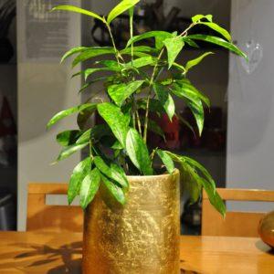 Keramikgefäß D18 H24cm Dracaena surculosa 59,90€