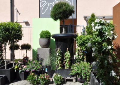 Saturn Atelier Vierkant Pinus Hochstamm