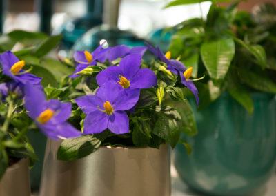 Bluehende Topfpflanzen Blumen Speth
