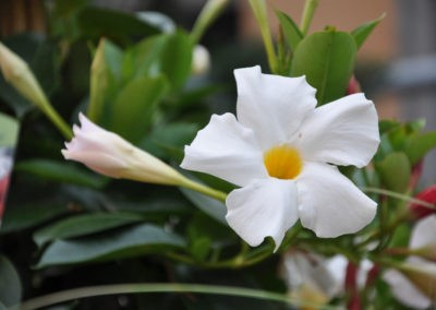 Blumen Speth Gartenausstellung13