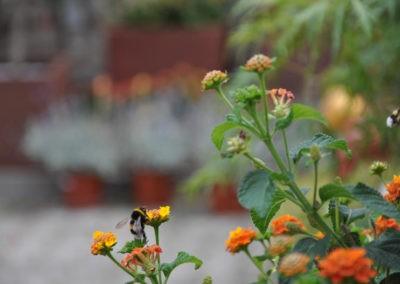 Blumen Speth Gartenausstellung15