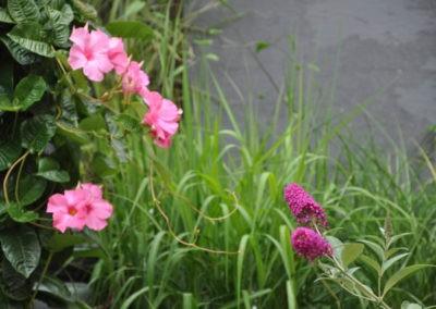 Blumen Speth Gartenausstellung16