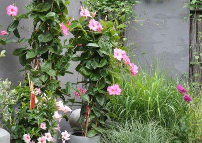 Blumen Speth Gartenausstellung17