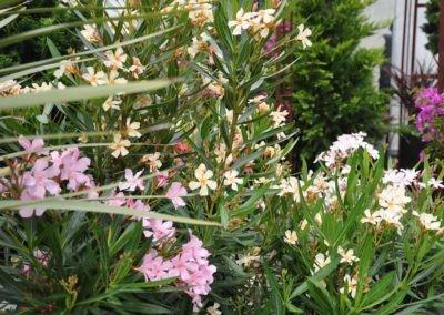 Blumen Speth Gartenausstellung20