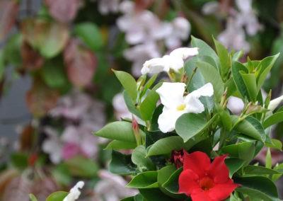 Blumen Speth Gartenausstellung5