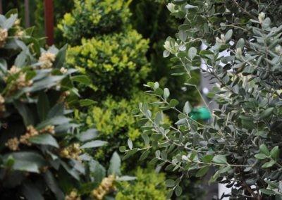 Blumen Speth Gartenausstellung6