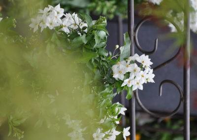 Blumen Speth Gartenausstellung7