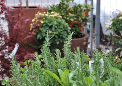 Blumen Speth Gartenausstellung9