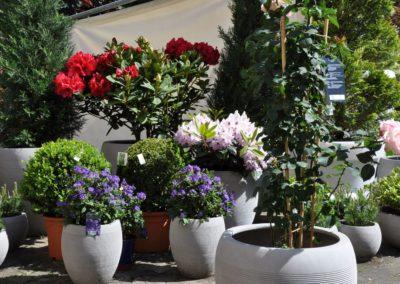 esteras warm concrete Rhododendron Solanum