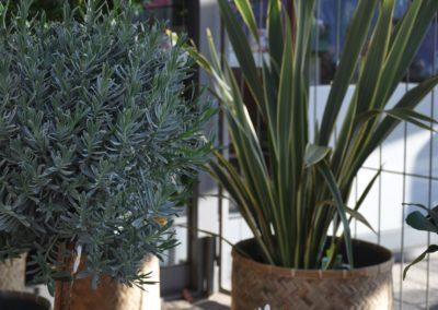 Kuebelpflanzen Wintergarten