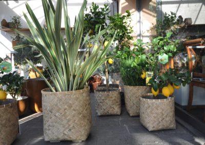 Mediterrane Kuebelpflanzen