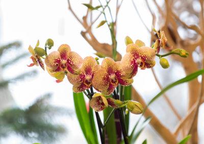 Orchideen Bei Blumen Speth