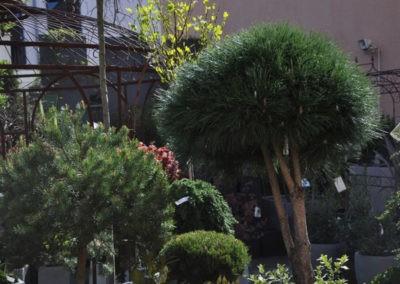 Speth Gartenausstellung7