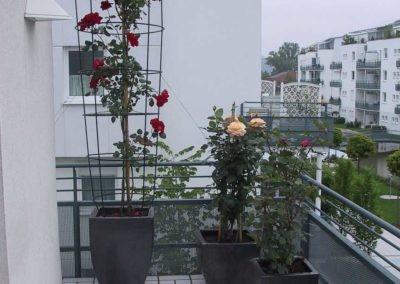 Terrassen Begruenung2