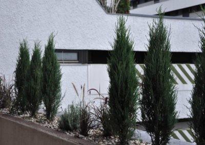 Terrassen Begruenung39