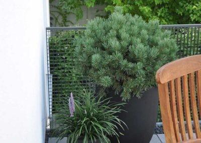 Terrassen Begruenung41
