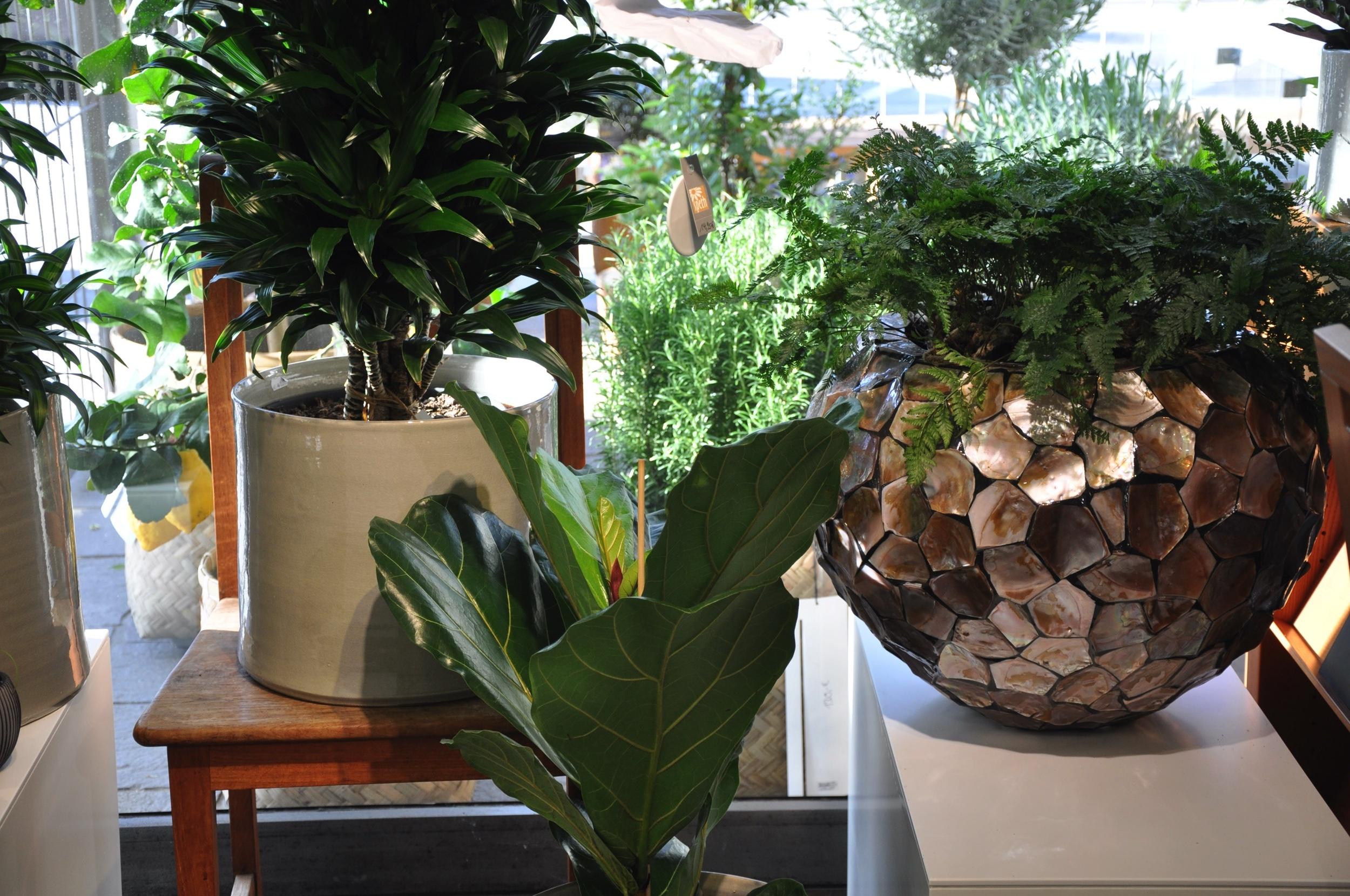 Zimmerpflanzen In Tollen Gefaessen