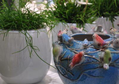 Zimmerpflanzen Interessante Gefaesse